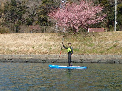 サップやシーカヤックから見上げる青野川のお花見